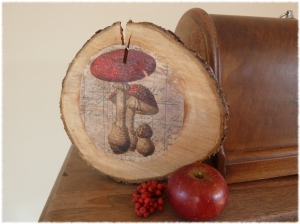 Pilz auf Holzscheibe