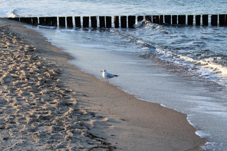 Ostsee-Heiligendamm-Winter05
