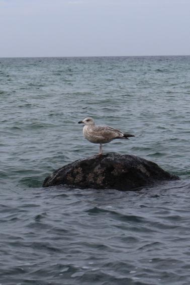 Ostsee-Rerik-Meer-Urlaub11