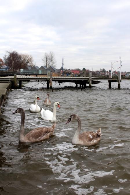 Ostsee-Rerik-Meer-Urlaub18
