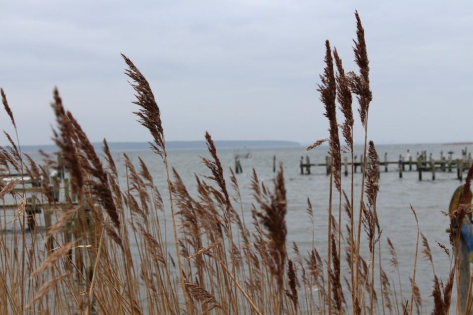 Ostsee-Rerik-Meer-Urlaub20