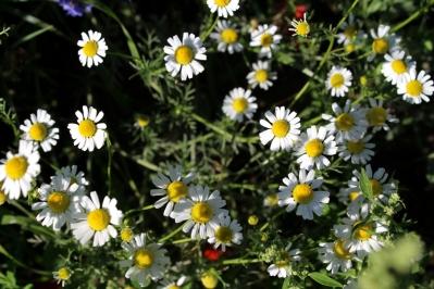 Kameragurt-Sonnenblumen-Kornblumen-Kamille08