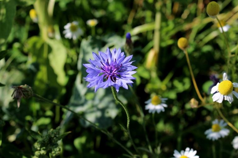 Kameragurt-Sonnenblumen-Kornblumen-Kamille09