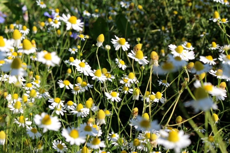 Kameragurt-Sonnenblumen-Kornblumen-Kamille11