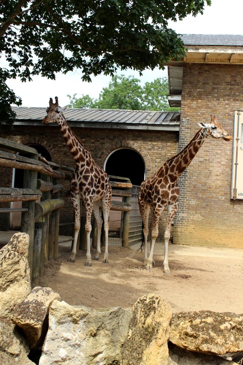 London_6Additional_Zoo04