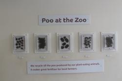London_6Additional_Zoo05