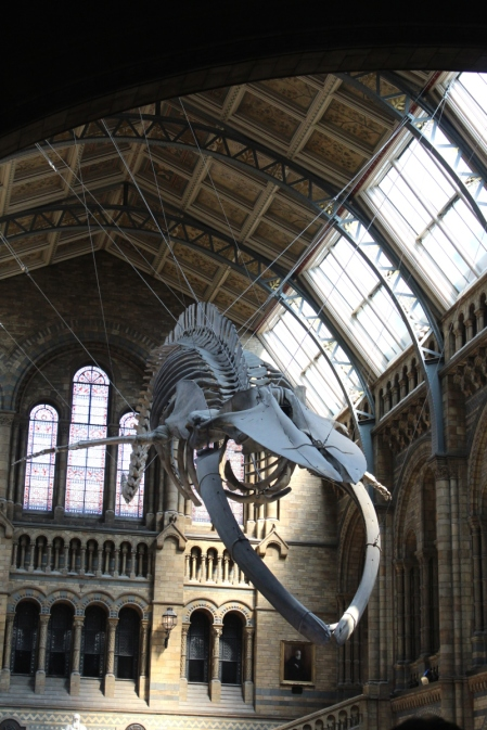 London_6Adds_National-History-Museum03