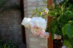 Garten_Bienenwiese_Rosen11