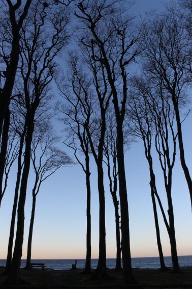 Gespensterwald-Ostsee01