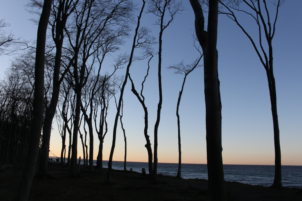 Gespensterwald-Ostsee03