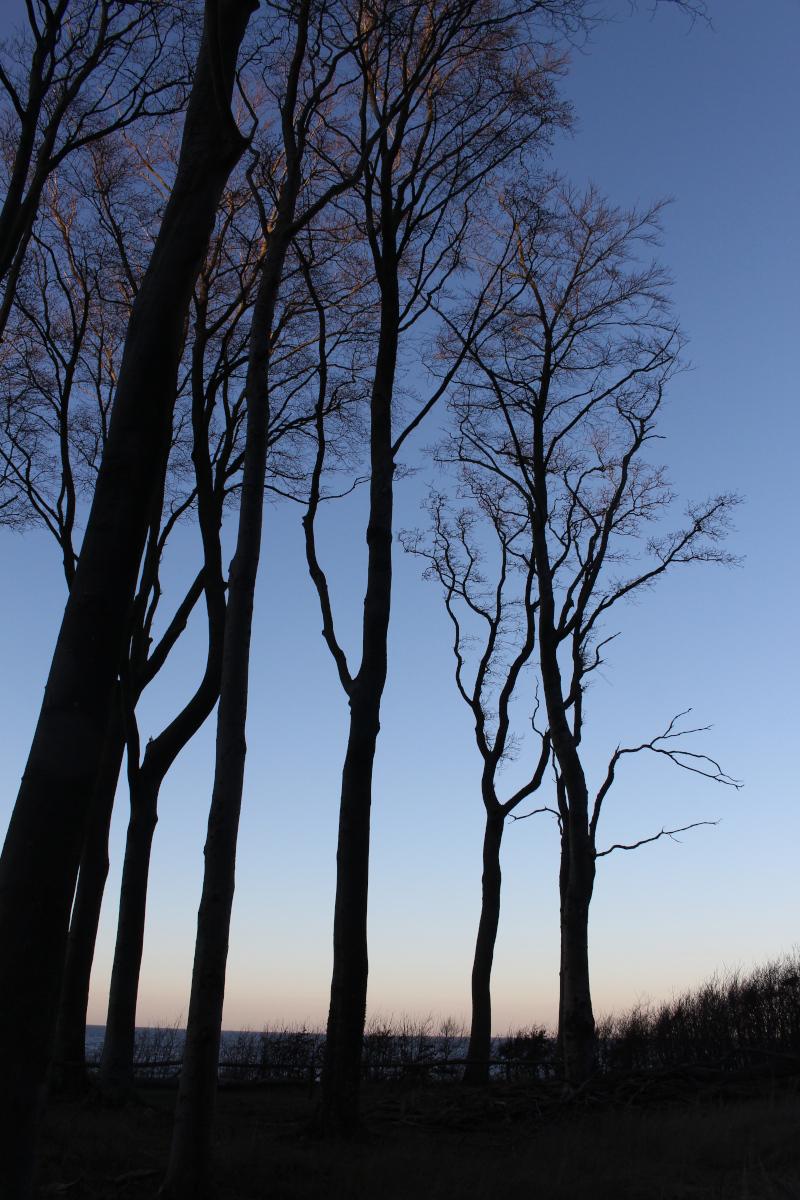 Gespensterwald-Ostsee04